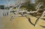 Schatten, Dünenwäldchen Algadir, Marokko 86 x 68 cm, Tusche-Punkttechnik und Aquarell