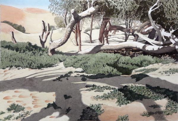 Dancing Trees, Agadir