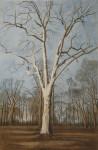 Der einsame Baum, Krefed